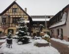 Le Cerf - Marlenheim