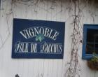 Vignoble Isle de Bacchus ©GP