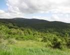 Le paysage de l'Aubrac ©GP