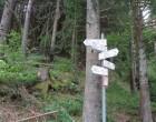 Panneau forêt © GP