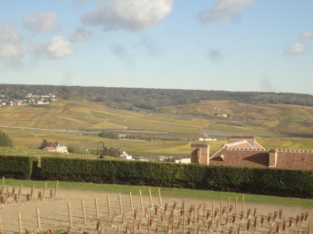 Quelques vignes dans la vallée de la Marne ©GP
