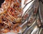 Langoustines et anchois ©Maurice Rougemont