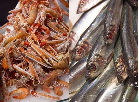 Langoustines et sardines ©Maurice Rougemont