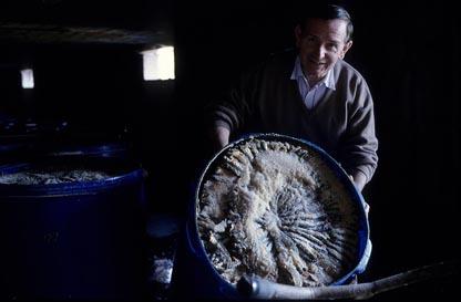 Anchois de Collioure © Maurice Rougemont