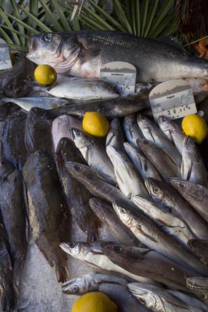 Sardines © Maurice Rougemont