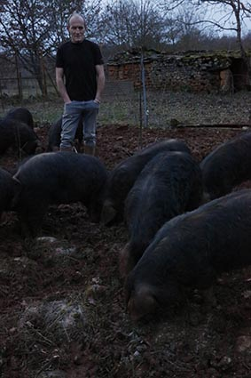 Les cochons noirs ©Maurice Rougemont