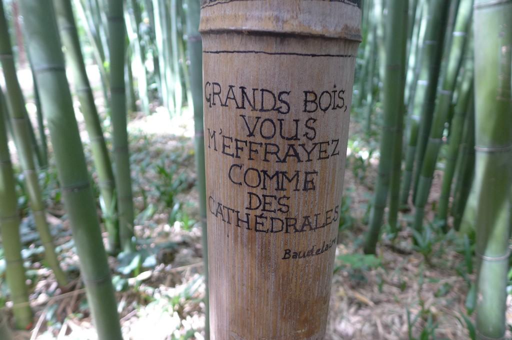 Citation sur un arbre © GP