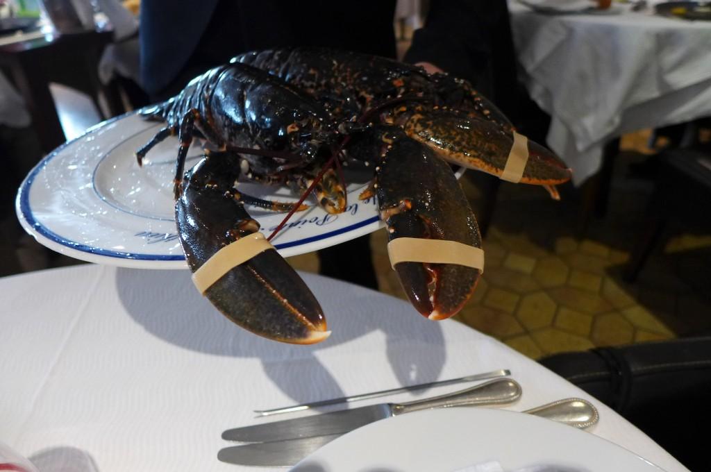 Le homard bleu © GP