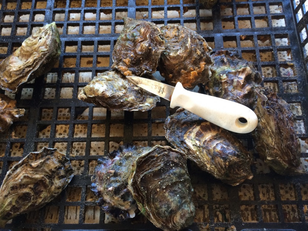 Les huîtres réthaises © GP