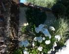 L e jardin © GP