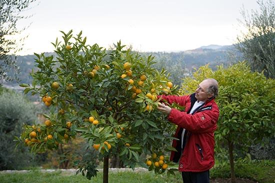Jacques Chibois avec ses mandariniers ©Maurice Rougemont