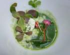 Consommé aux poireaux, salicornes, pomme granny smith, malto basilic , apple blossom et oxalys ©GP