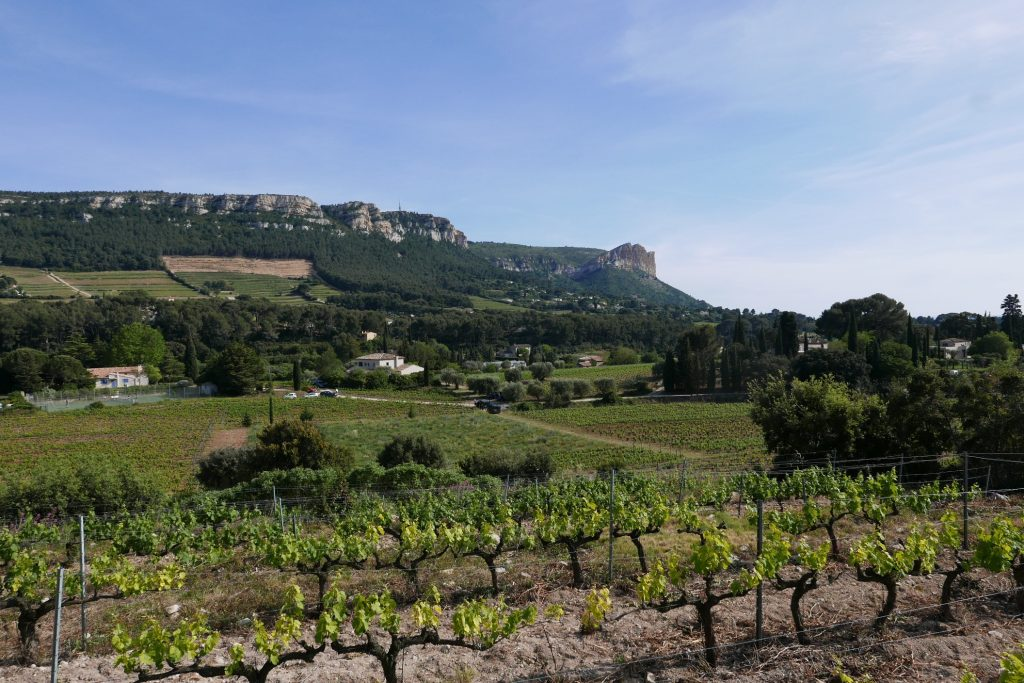 Les vignes face au massif rocheux © GP