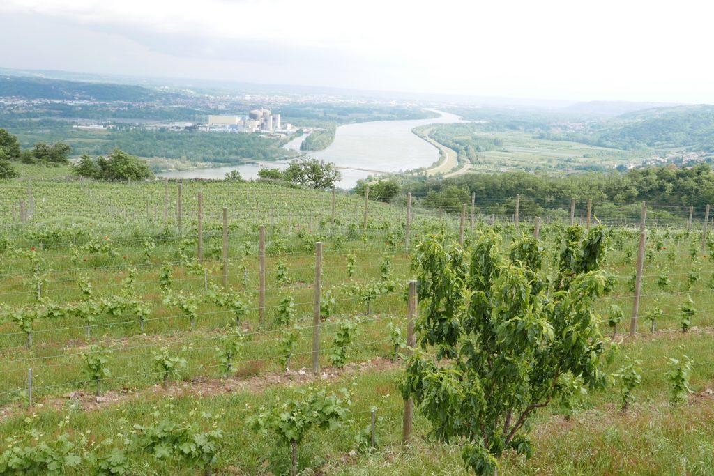 Paysage des vignes © GP