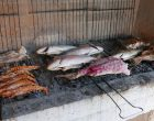 Les poissons © GP