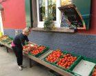 Les tomates © GP