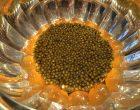 Lentilles et caviar ©GP