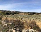 Les vignes ©GP