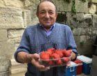 Albert Tauran et ses fraises © GP