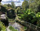 Un pont dans la verdure © GP