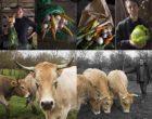 Nantes : carottes, choux et vaches par Maurice Rougemont
