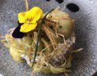 Aubergine en babaganoush © GP