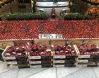 Les fraises © GP