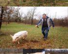 Truffière des Grèzes - Lalbenque