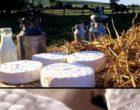 Coulommiers : Maurice Rougemont retrouve le goût du fromage d'avant
