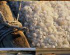 Noirmoutier : le sel et sa magie vus par Maurice Rougemont