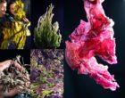 Ars-en-Ré : Algorythme, les algues responsables vues par Maurice Rougemont