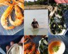 Loix : les crevettes impériales de Frédéric Voisin vues par Maurice Rougemont