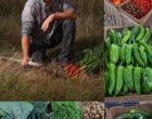 Noirmoutier :  Anthony Billon et ses légumes vus par Maurice Rougemont
