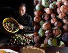 La récolte des noix © Maurice Rougemont