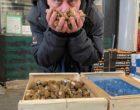 Rungis : les champignons selon NSR