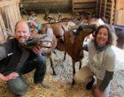 La Chèvrerie de Combebelle - Bize-Minervois