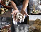 Saint-Jean-de-Monts : les grenouilles de la Quich'notte sont en vente !