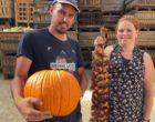 Mont-Bernanchon : courges et ail chez les Caron
