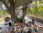 Alagni-Heraklion : déjeuner au vignoble